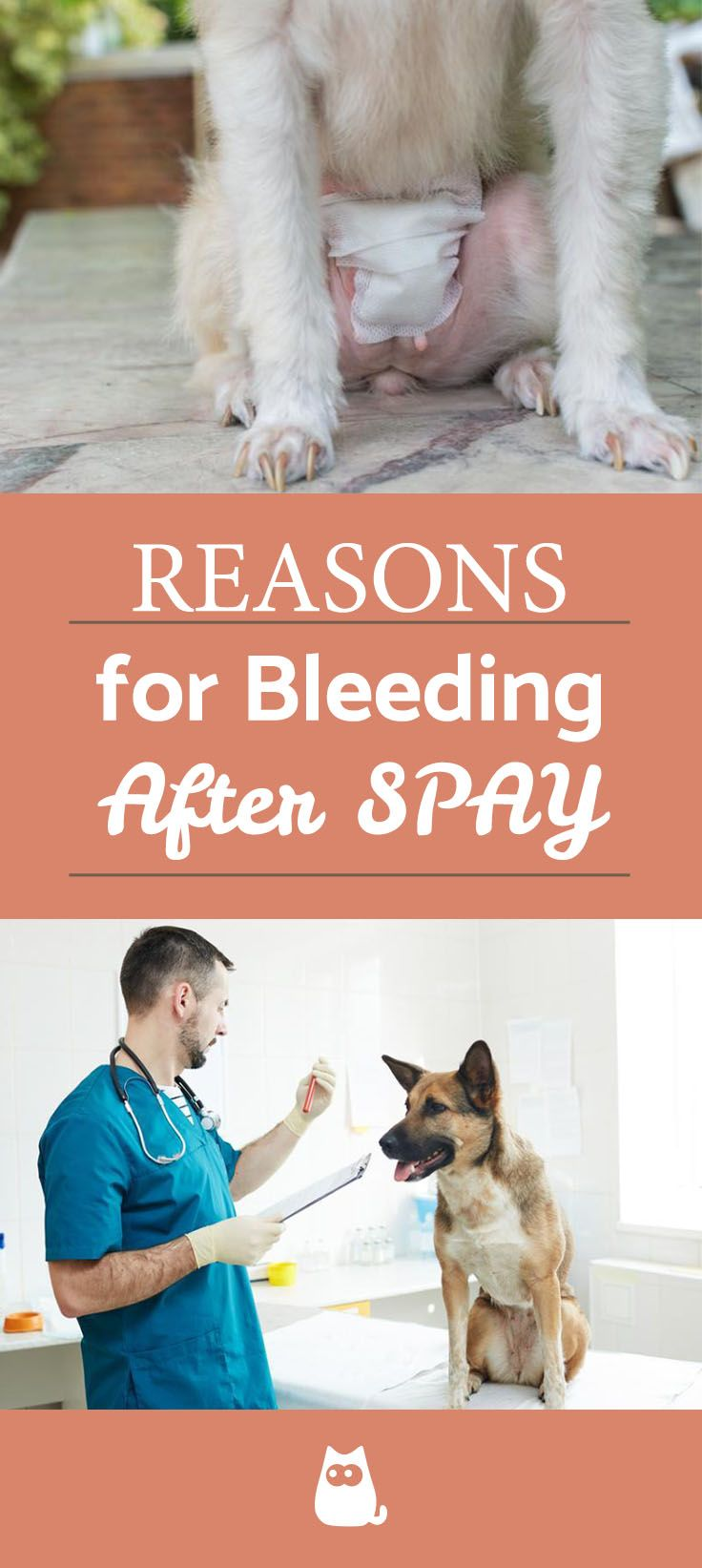 Dog Bleeding After Spay Causes And Treatment In 2020 Dog Treatment Dog Spay Spay