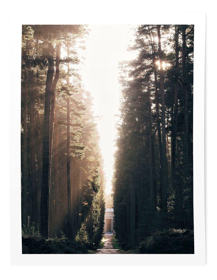 Skogskyrkogården - the forest cemetary by Sandra Linnell. Gorgeous light! Available as poster at https://printler.com/sv/foto/219
