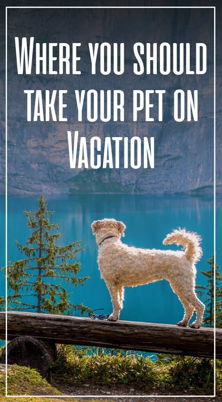 Don't forget your favorite four-legged friend on your next trip. Here is where to take your pet on your next vacation!