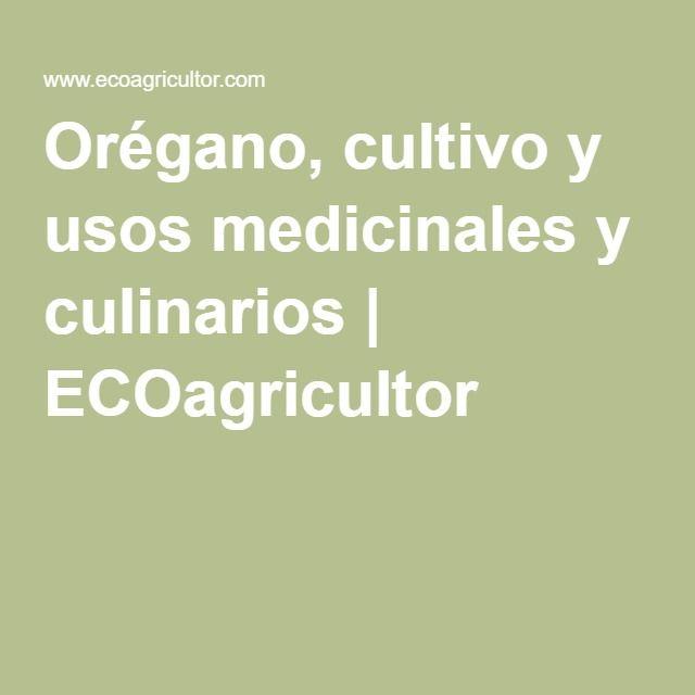 Orégano, cultivo y usos medicinales y culinarios | ECOagricultor