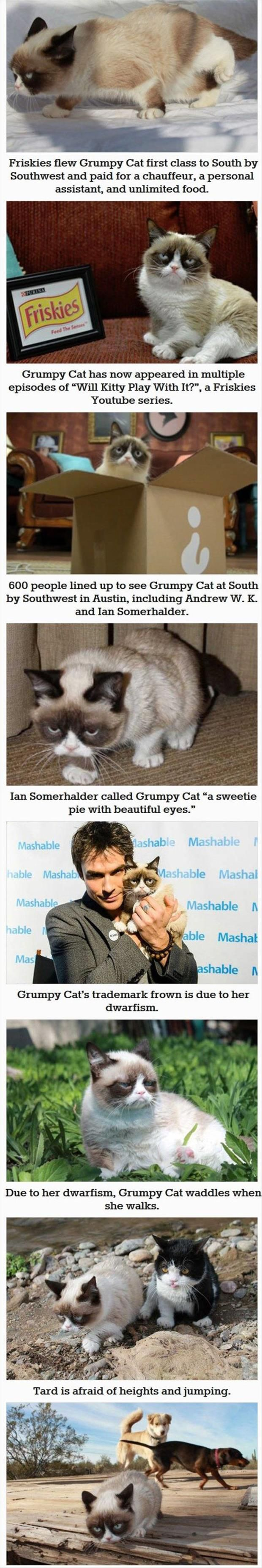 grumpy cat wedding invitations%0A    Things You Probably Didn u    t Know About Grumpy Cat  Joindarkside