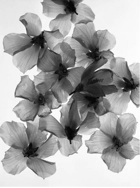 flower x-ray | black and white. Great tattoo idea for my half sleeve