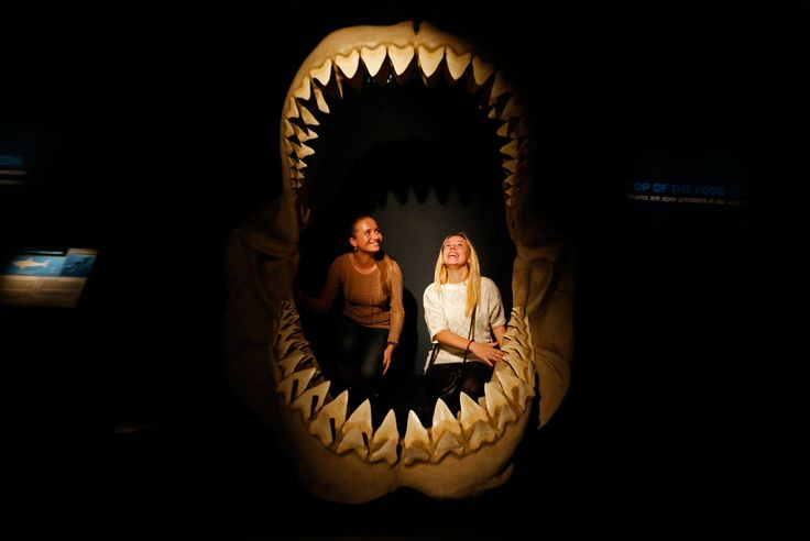 "Women inspect the insides of the jaws of a megalodon, an extinct species of the shark, as they visit the international exhibition titled ""Planet Shark: Predator or Prey"" at the Military-Historical Museum of Artillery, Engineer and Signal Corps in St. Petersburg, Russia, on Oct. 31. The exhibition includes collections of pristine fossil specimens, jaws, hunting and commercial fishing equipment, full size casts and models of different sharks, according to organizers."