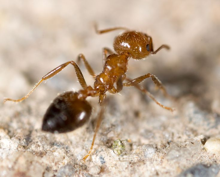 As 20 melhores ideias de Was hilft gegen ameisen no Pinterest - hausmittel gegen ameisen in der küche