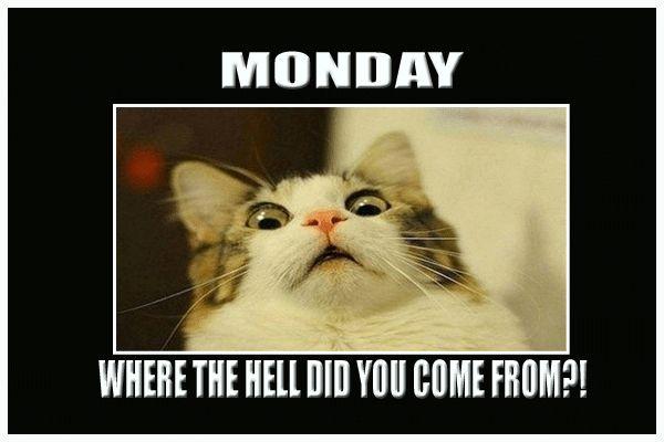 Funny Memes Morning Tgif Good
