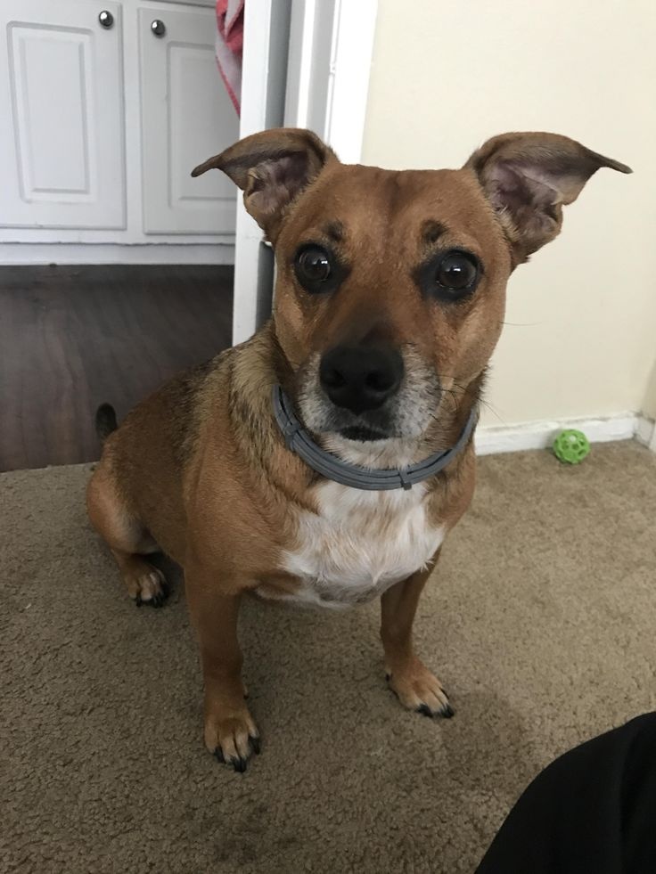 Hello this is Mater. I got him from the shelter not too long ago and they were unable to tell me what type of dog he is and I can't afford a DNA test for him. So I was wondering if anyone could help me figure out what type of dog he is. Thanks! #dogpictures #dogs #aww #cuteanimals #dogsoftwitter #dog #cute