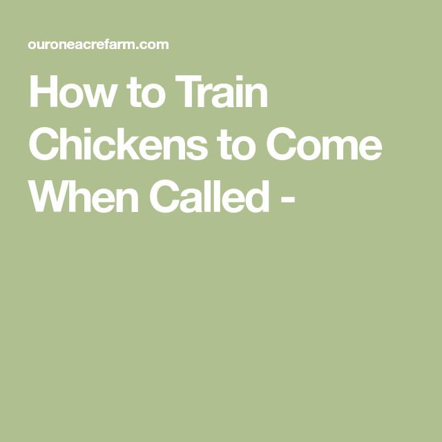 How to Train Chickens to Come When Called -