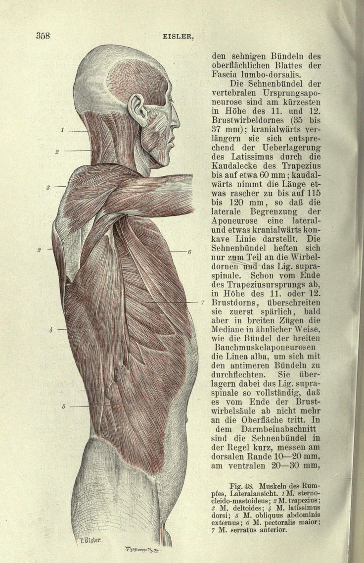 The 224 best Анатомия images on Pinterest | Anatomy reference, Human ...