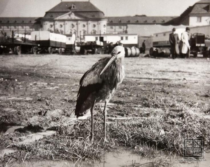 Pavol Poljak: Námestie Slobody (1930 - 1940)