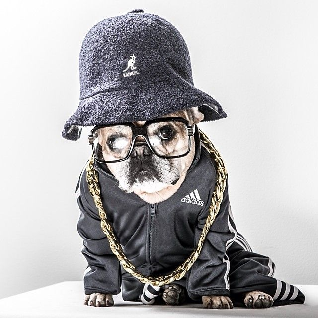 'Run DMC', Stitch, the French Bulldog, in a Classic 80's Rap costume, by stitchbully http://ift.tt/1st7kqV