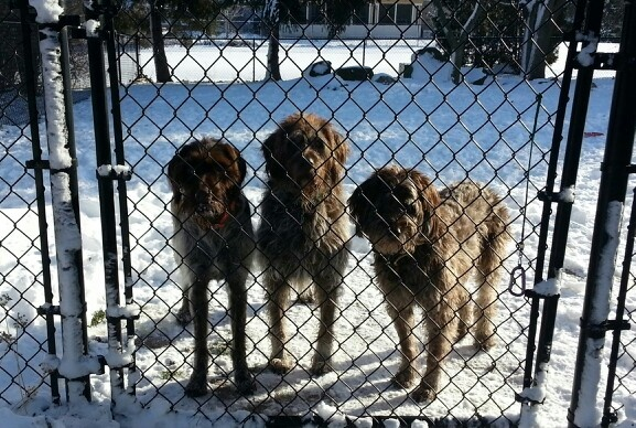 Stanley,  Cooper and Gretchen ready to go.