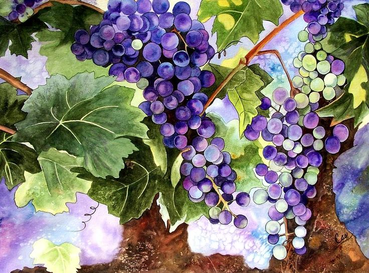 Image Result For Images Grapes Purple And Green Painting