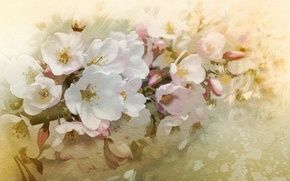 Обои цветы, вишня, ветка, весна, цветение