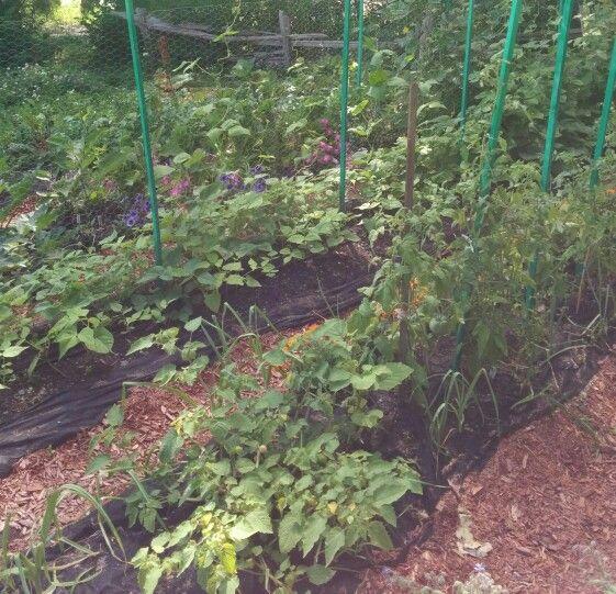 Jardin paresseux avec paillis et toile noire