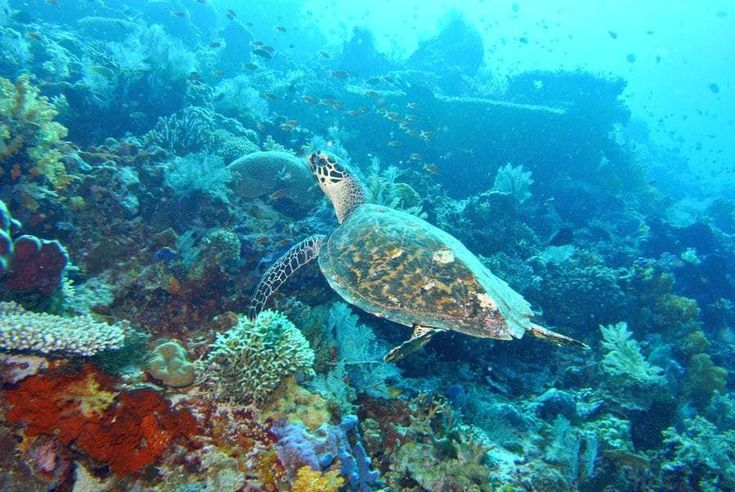 Komodo National Park(Nusa Tenggara Timur, インドネシア)|コモド島とその周辺(Shin  Okamotoさん) - 02