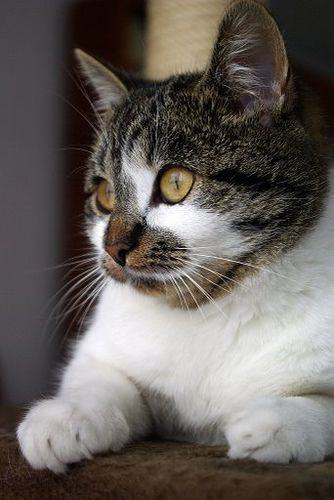 Cat / Source / Photo: Lilithis (cute animals)