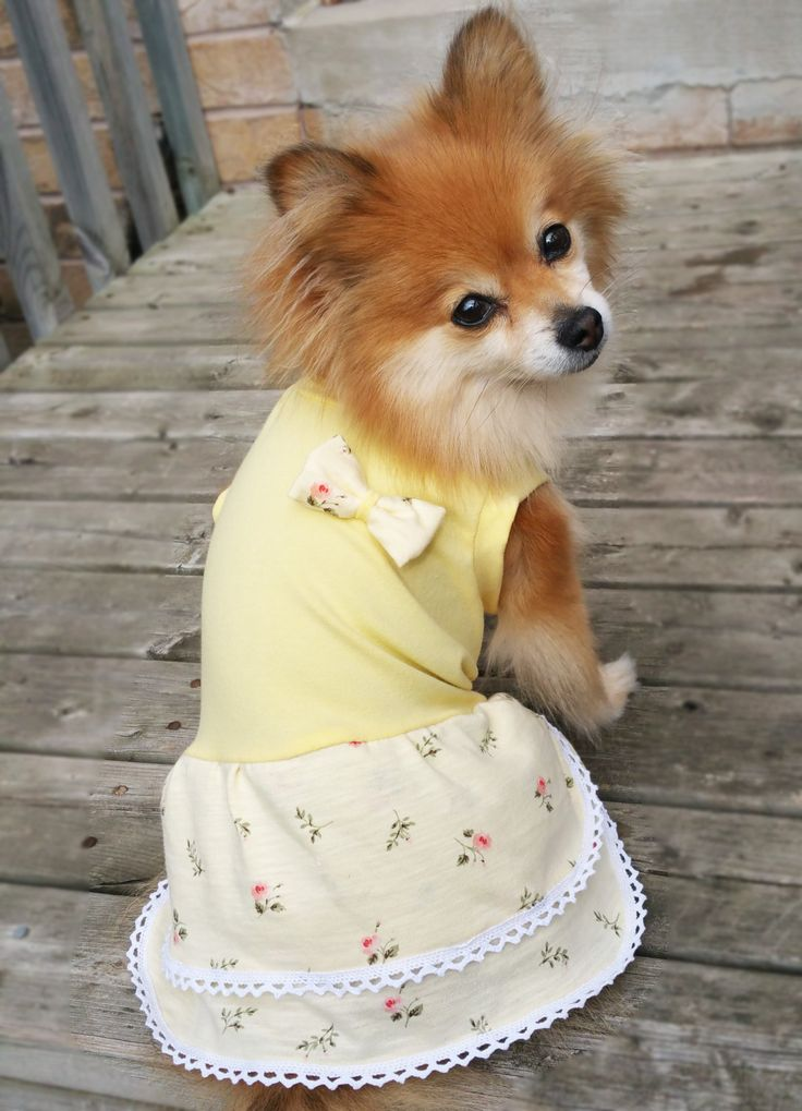 Yellow flower Dog Dress, XS~4XL Size, dog clothes, small dogs clothes, handmade puppy tshirt, gift for dog, girl dog clothes, dog hoodie by puppydoggyclothes on Etsy