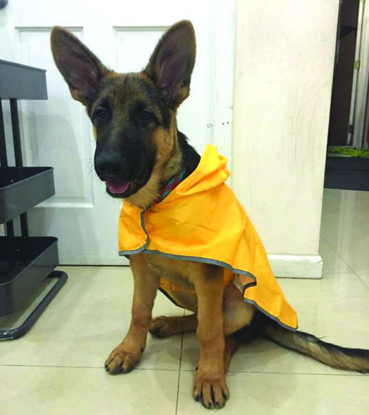 Rambo's wearing our Sunshine Packable Rain Poncho. Follow Rambo on Instagram: https://www.instagram.com/meetthechows/