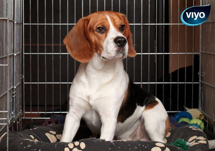 Vous partez en voyage avec votre chien? Laissez le s'habituer à sa cage en la plaçant bien avant le départ dans le salon.