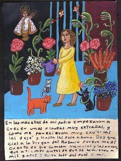 """""""On the pots of my patio began growing very strange plants, but since they looked exotic I let them grow, and I even fertilize them. I give thanks to the Virgen del Rosario because on time I realized that they ate animals. I pulled them out before they ate my cats and, who knows, even me."""