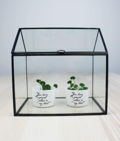 mini serra due vasetti