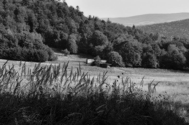 bwstock.photography  //  #hunting #meadow #forest