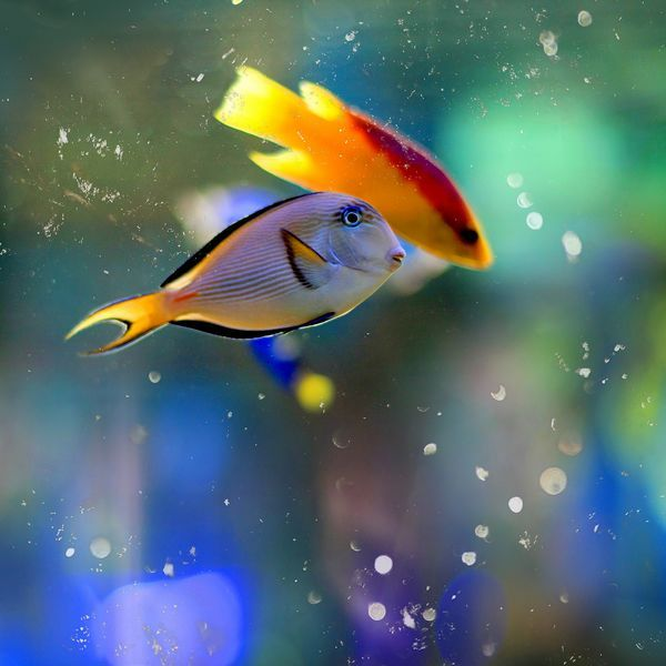 18 best bible verses about friendship images on pinterest for Beautiful tropical fish