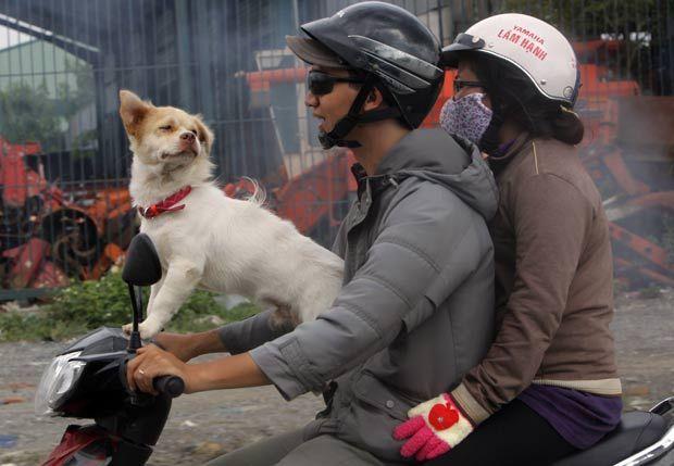 Um casal foi flagrado passeando com um cão em uma scooter em Ho Chi Minh, no Vietnã. A cena foi fotografada nesta terça-feira (3) por Nick Ut. (Foto: Nick Ut/AP