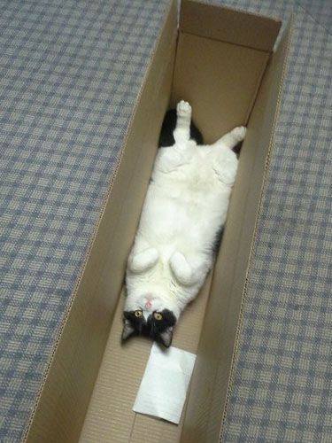 """Cats In Boxes - Funny Cat Photos - Good Housekeeping - """"Draw me like one of your French girls, Jack."""""""