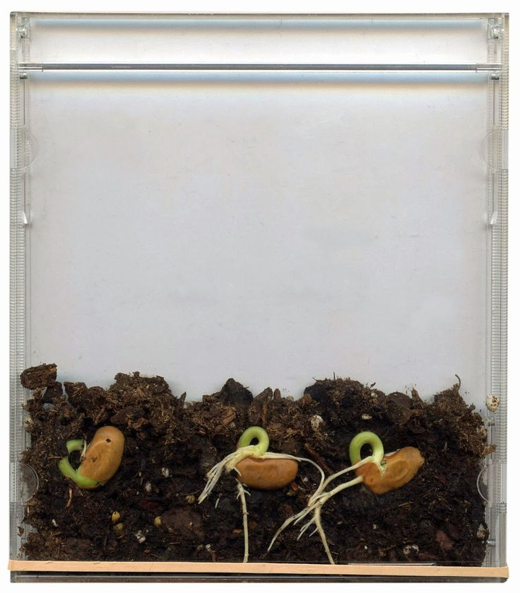 Seeds in a CD Case - ART PROJECTS FOR KIDS