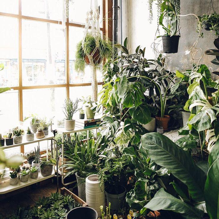 Best 25+ Conservatory Plants Ideas On Pinterest