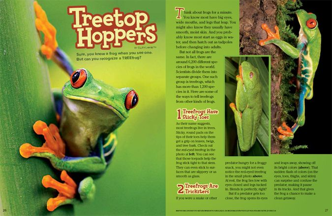 Reptile and Amphibians Facts for Kids