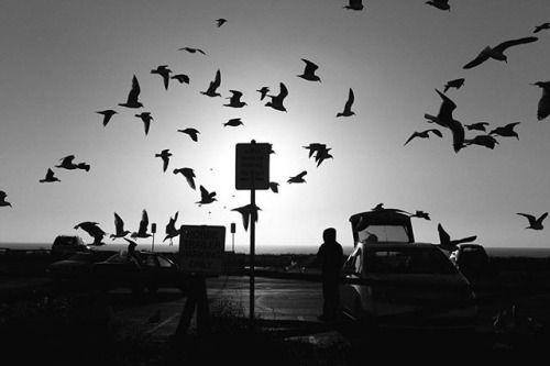 Однажды в Калифорнии. Фото - Михаил Сокольников @mishasokolnikov съемка камерой Leica M Monochrom. Друзья желаем вам хороших выходных и новых замечательных снимков!  Once in #California. Photo by Misha Sokolnikov@mishasokolnikov shot on #LeicaMMonochrom. We wish you a nice #weekend and new #wonderful pictures! #Leica #LeicaCamera #LeicaMSystem #Leicagrapher#LeicaRussia#russianphotographer#streetphotography #Leicaimages #Photography #Photographer #USA #blackandwhite #Monochrome…