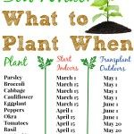 What To Plant When & $5 Off Burpee Coupon!