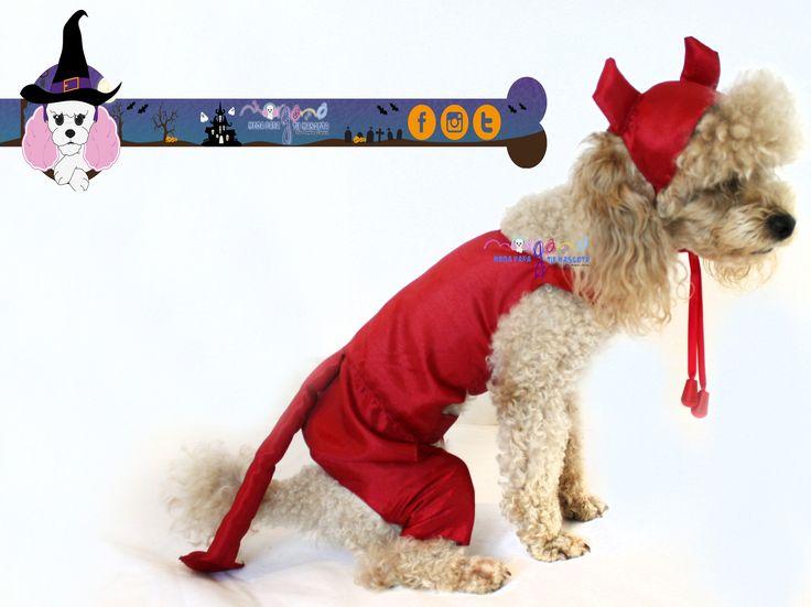 Disfraz de diablito, color rojo, ♂. Con gorrito. Mascota: Ginebra (Poodle) Talla: 1  Fotografia: Tatiana Rodriguez Diseño: América García