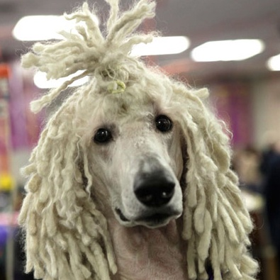 if i ever have a dog with long curly hair, that pup is going to end up with dreads sooner or later.