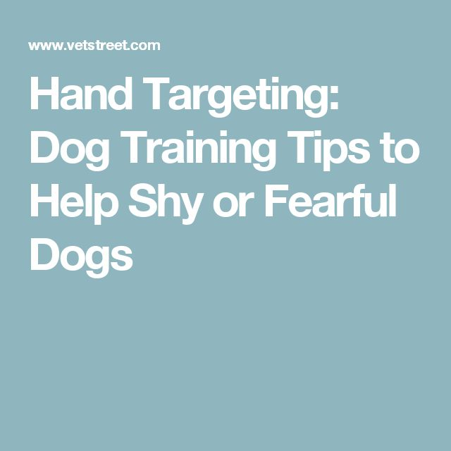 Hand Targeting: Dog Training Tips to Help Shy or Fearful Dogs