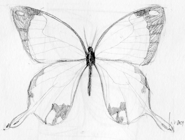 butterfly-drawing-06....How to draw a butterfly!... A great subject for a painted rock!