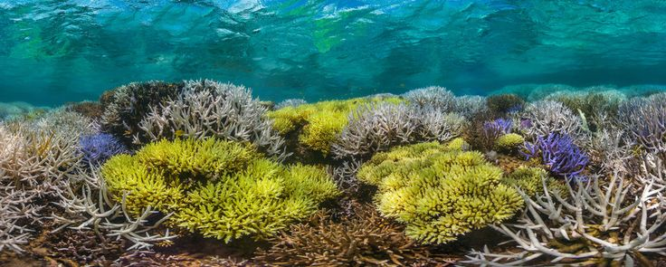 Jeff Orlowski's documentary emphasizes that climate change isn't just an aboveground phenomenon — warmer oceans mean that coral reefs are in peril, too.