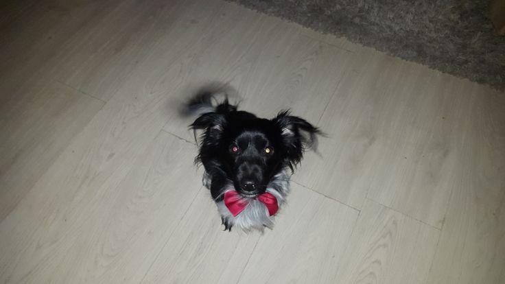 Hunde Foto: Sandra und Paule - Chic gemacht Hier Dein Bild hochladen: http://ichliebehunde.com/hund-des-tages  #hund #hunde #hundebild #hundebilder #dog #dogs #dogfun  #dogpic #dogpictures