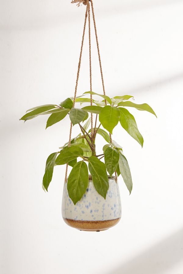 Speckled Ceramic Hanging Planter plants