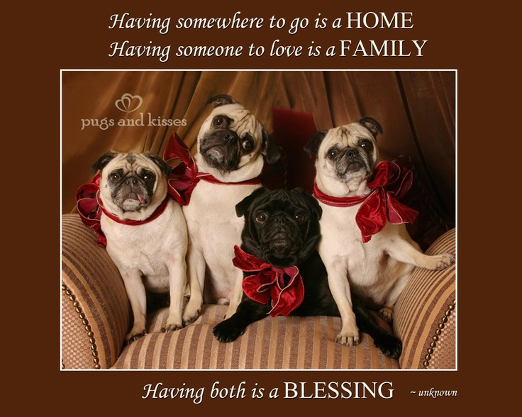 Pugs and Kisses from my facebook page