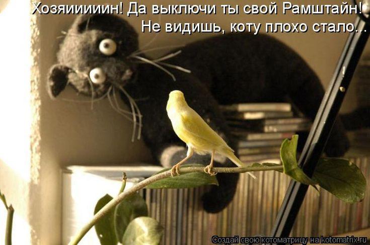 Хозяииииин! Да выключи ты свой Рамштайн!  Не видишь, коту плохо стало......