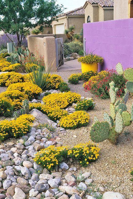 Residential Landscaping Albuquerque : Plants desert landscape design garden