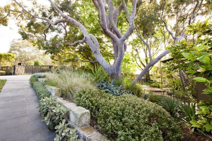 urban bush setting - Peter Fudge