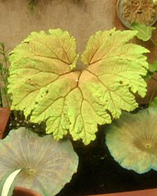How to color you cement cast leaf