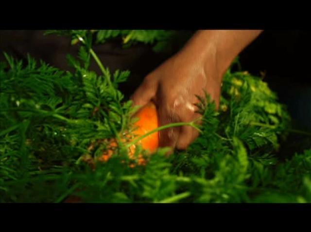 Informe primer año de Gobierno (Pacto Hambre Cero y Fertilizantes) - Gobierno de Guatemala:
