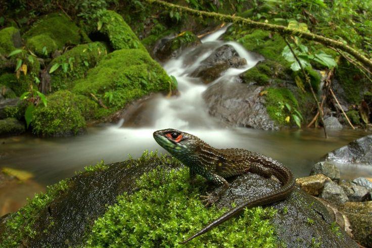 270 best рептилии images on Pinterest | Lagartos, Animales y Anfibios
