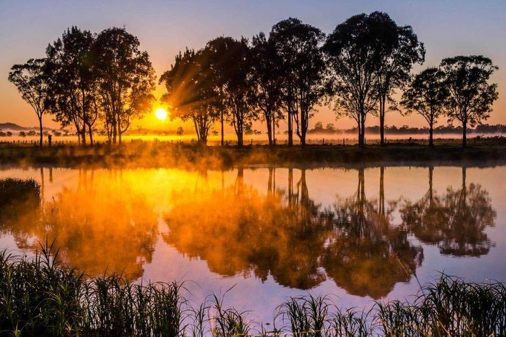 Sunrise through the fog and trees at Casino in northern NSW.