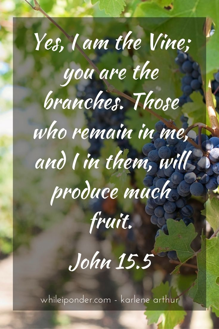 He is the Vine; we are the branches...
